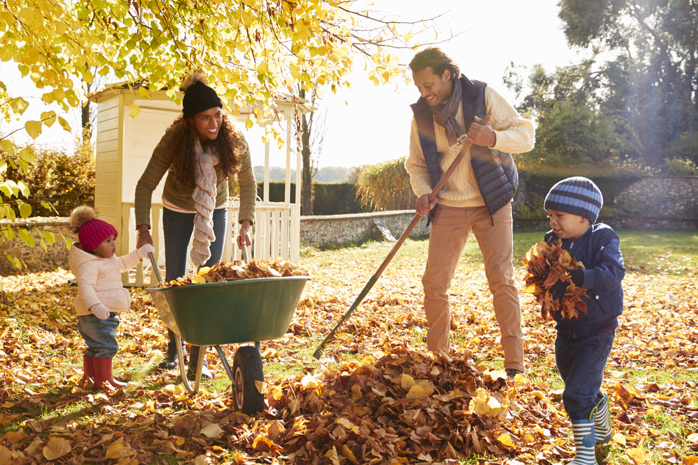 The Best Fall Cleanup